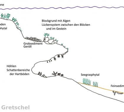 Abb.1.: Die Lebensräume der Felsküsten (G. Gretschel)