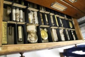 Bild: Ein Teil aus der Sammlung der Wirbellosen