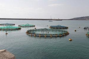 Käfige zur Mast von Thunfisch an der Küste Siziliens. Hier werden die Tiere einen Sommer lang gefüttert, um sie im Herbst teuer verkaufen zu können. ©Manuel Marinelli/Project Manaia