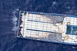 Pole and Line Fishing in den Malediven - Extrem effektiv, aber vollkommen frei von Beifang! ©Paul Hilton