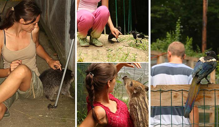 Viele Tierfindlinge entwickeln während der Betreuung ein vertrautes Verhältnis zu ihren PflegerInnen