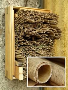 Selbst gebaute Insektennisthilfe für den Balkon; (Foto: Laura Pabst)