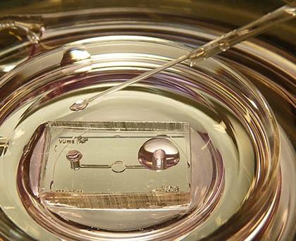 Eine mikrofluidische Kammer für in-vitro Kultur, die in Zusammenarbeit mit der technischen Universität Enschede entwickelt wurde. Diese neuartige Kulturmethode, die das Milieu der Eileiter simuliert, wurde von Kieslinger im IVF Labor VUmc erstmalig an menschlichen Embryonen getestet. © D.C. Kieslinger