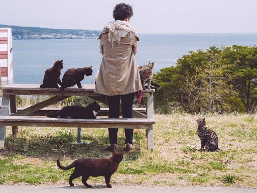 Auf Tashirojima leben mehr Katzen als Menschen © Flickr-User sonotoki