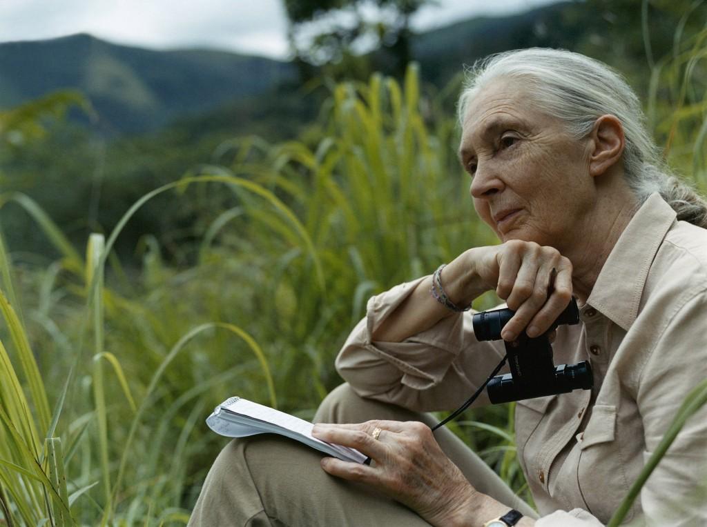 Geduld als Schlüssel zur Beobachtung - Jane Goodall im Freiland. © Gant Morten Bjarnhof, Bildnachweis: JGI-International
