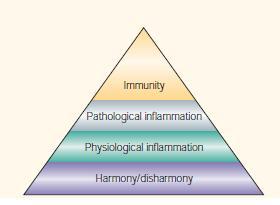 Élie Metchnikoffs Konzept der Entzündung mit verschiedenen Stadien. Harmony/disharmony stellt dabei nichts anderes dar, als das Stadium der Homöostase. Quelle: Tauber, A. I., 2003