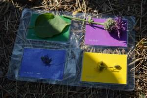 Abb. 4: So bunt ist die Natur - Kinder lernen über die Farben und Farbstoffe von Pflanzen. © Ulrike Mittermüller