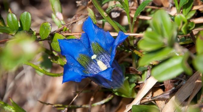 Erstes gemeinschaftliches Botanisieren