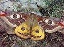 NaWi Sammlung Schmetterling