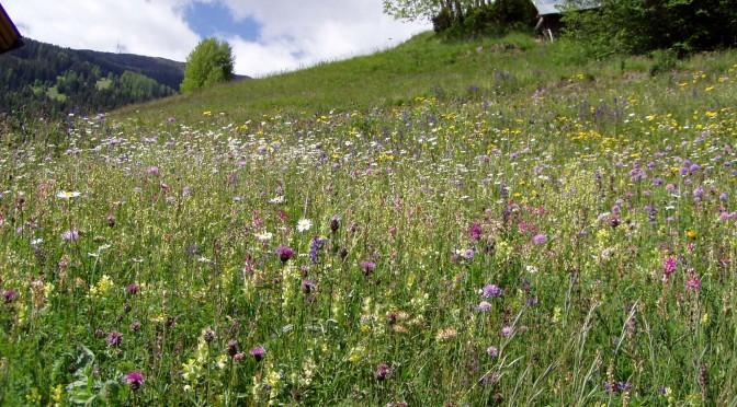 GEO-Tag der Artenvielfalt