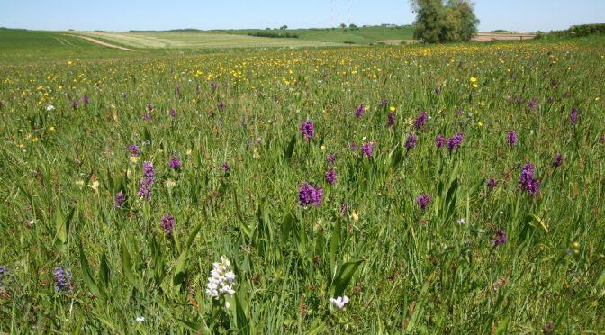 Erhalt und Wiederherstellung von artenreichem Grasland – praktischer Naturschutz