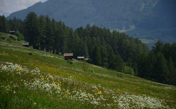 Tiroler Tag der Artenvielfalt Stubaital, 6.-7. Juli 2018