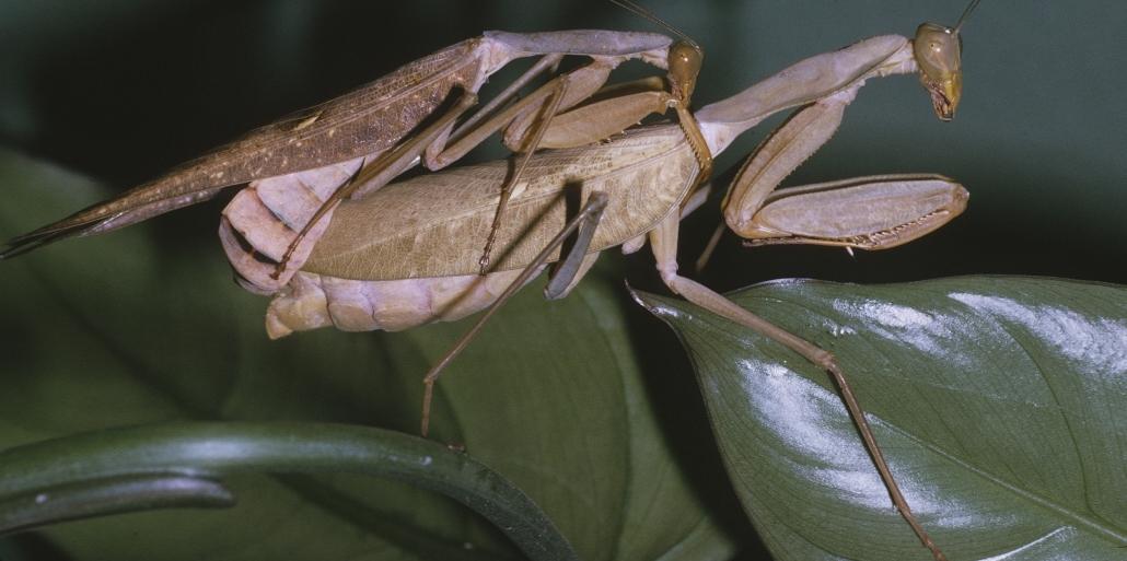 :: Das bizarre (Liebes)leben von Insekten & Co