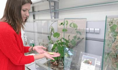 """:: 10 Fragen an berufstätige BiologInnen: Lisa Fischinger – Studienassistentin """"Bio für Kids & Teens"""""""