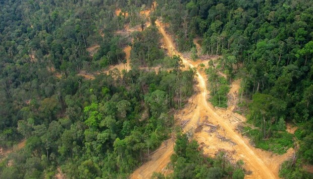Logging road East Kalimantan 2005
