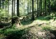 :: Wälder – faszinierende Ökosysteme auf unserem Planeten