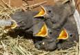 :: Die Wildtierhilfe Wien stellt sich vor