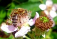 :: Bienenschutz im eigenen Garten