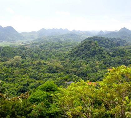 Blick über den Nationalpark Cuc Phuong im Herzen Vietnams: ein Stück wiedergewonnene Heimat für bedrohte Primaten (© Manuela Lembeck)