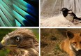 :: Verletztes Wildtier gefunden – was nun?