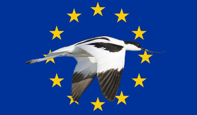 Wikimedia commons Säbelschnäbler und Europaflagge user:pjt56 http://upload.wikimedia.org/wikipedia/commons/thumb/5/59/Recurvirostra_avosetta-pjt2.jpg/1280px-Recurvirostra_avosetta-pjt2.jpg http://de.wikipedia.org/wiki/Europa#/media/File:Flag_of_Europe.svg