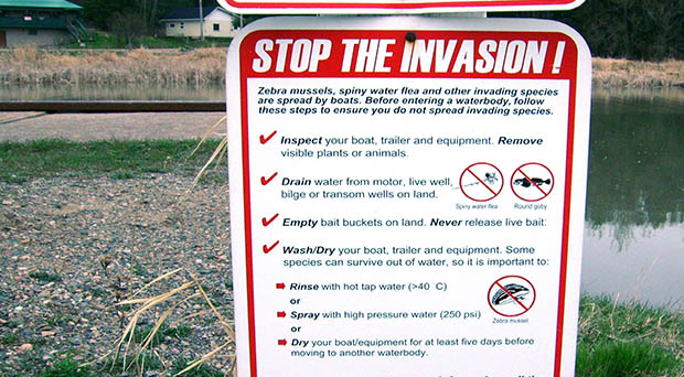 Stop the invasion - (c) Fungus Guy [CC BY-SA 3.0 via Wikimedia Commons https://upload.wikimedia.org/wikipedia/commons/5/5a/Stop_the_invasion.JPG