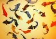 :: Upcycling im Tierreich: Was wir von anderen Spezies lernen können