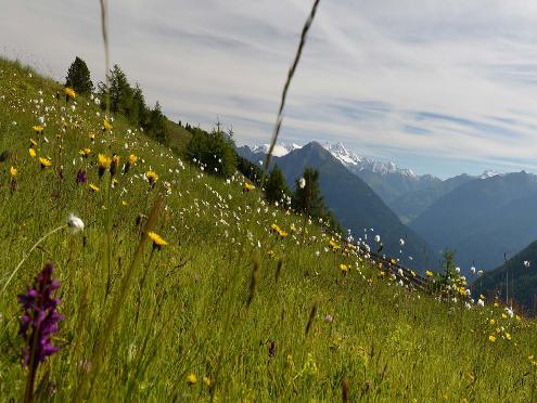 Tagung Biodiversiät in Osttirol (29.-30.9.2017)