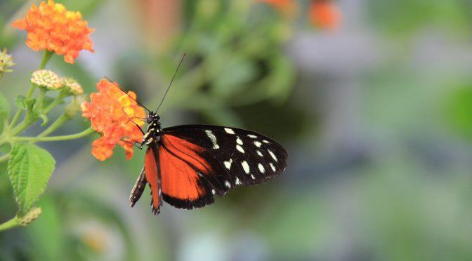 Mensch und Natur, Ausstellung im botanischen Garten
